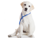 Veterinary Medicines & Diets