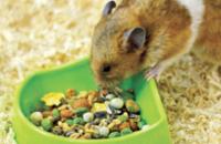 Small Pet Bowls & Bottles